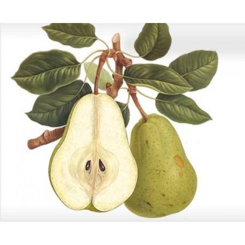 Erbolario - Fragranza per Legni Profumati - Legni Fruttati (ml.125)